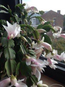 Fleurs 20122013-1 R