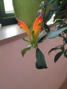 Fleurs 20122013-3 R
