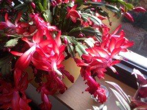 fleurs 24112013-1