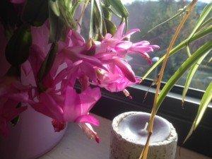 fleurs 24112013-4